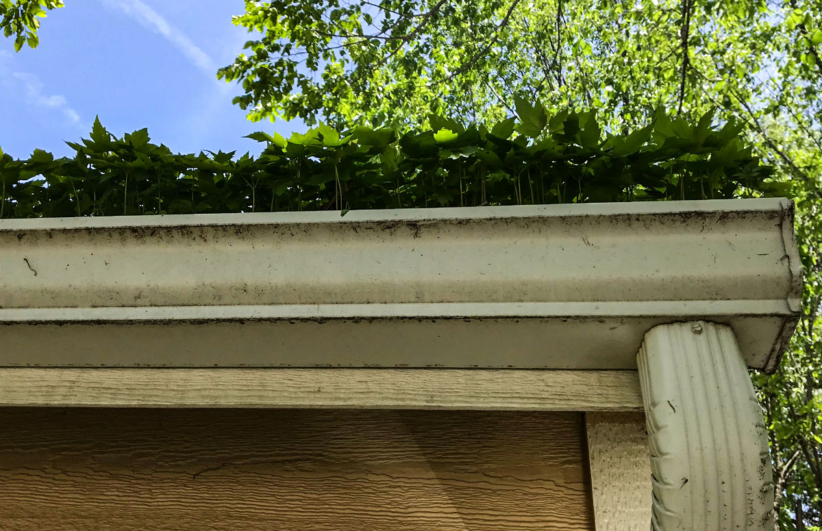 Why It's Important For Your Home to Have a Reliable Gutter System